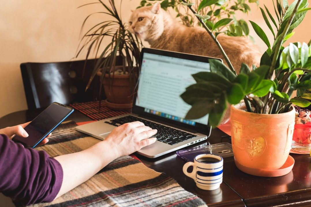 remote working station with laptop and cat